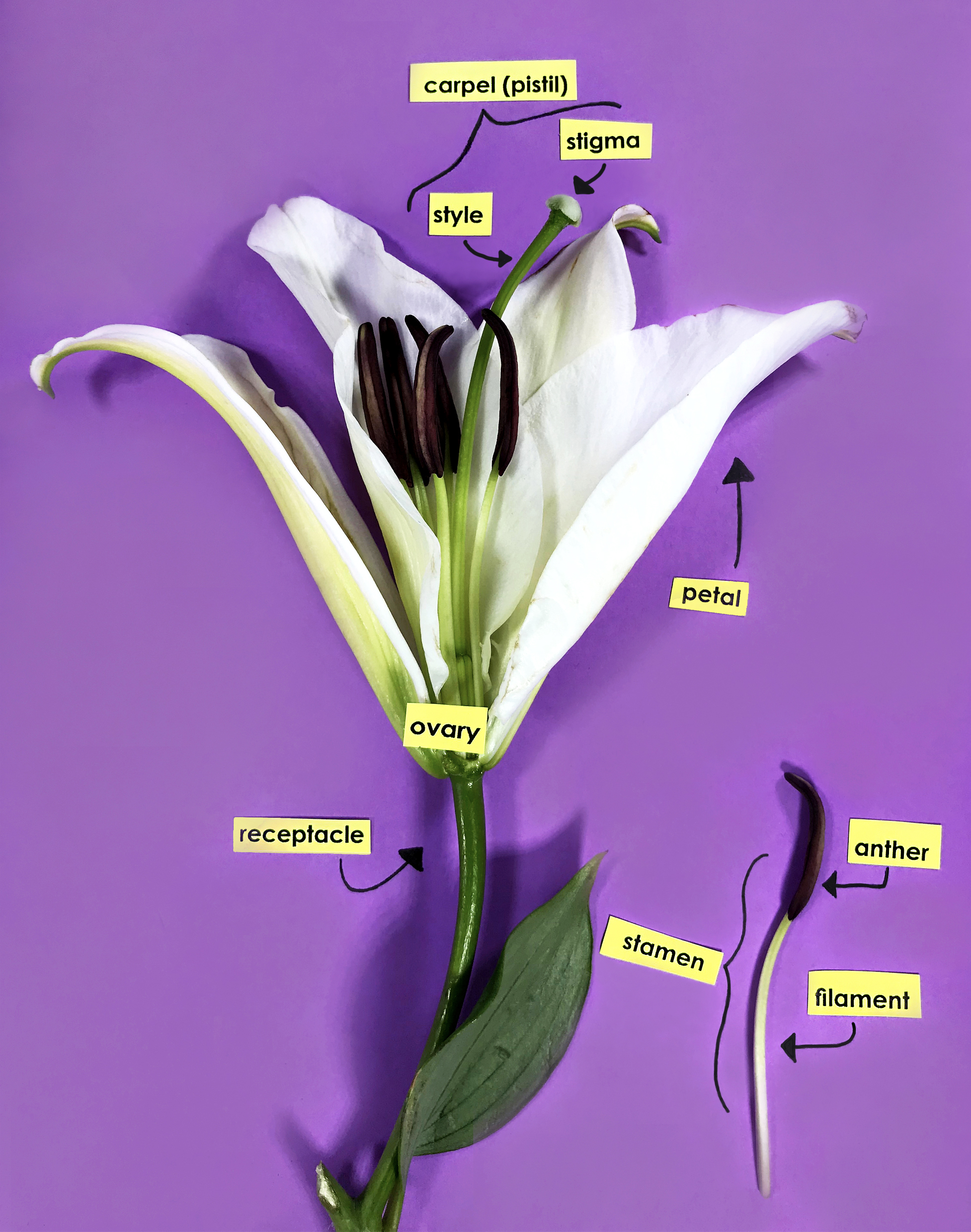 Parts of a Flower Classroom Activity